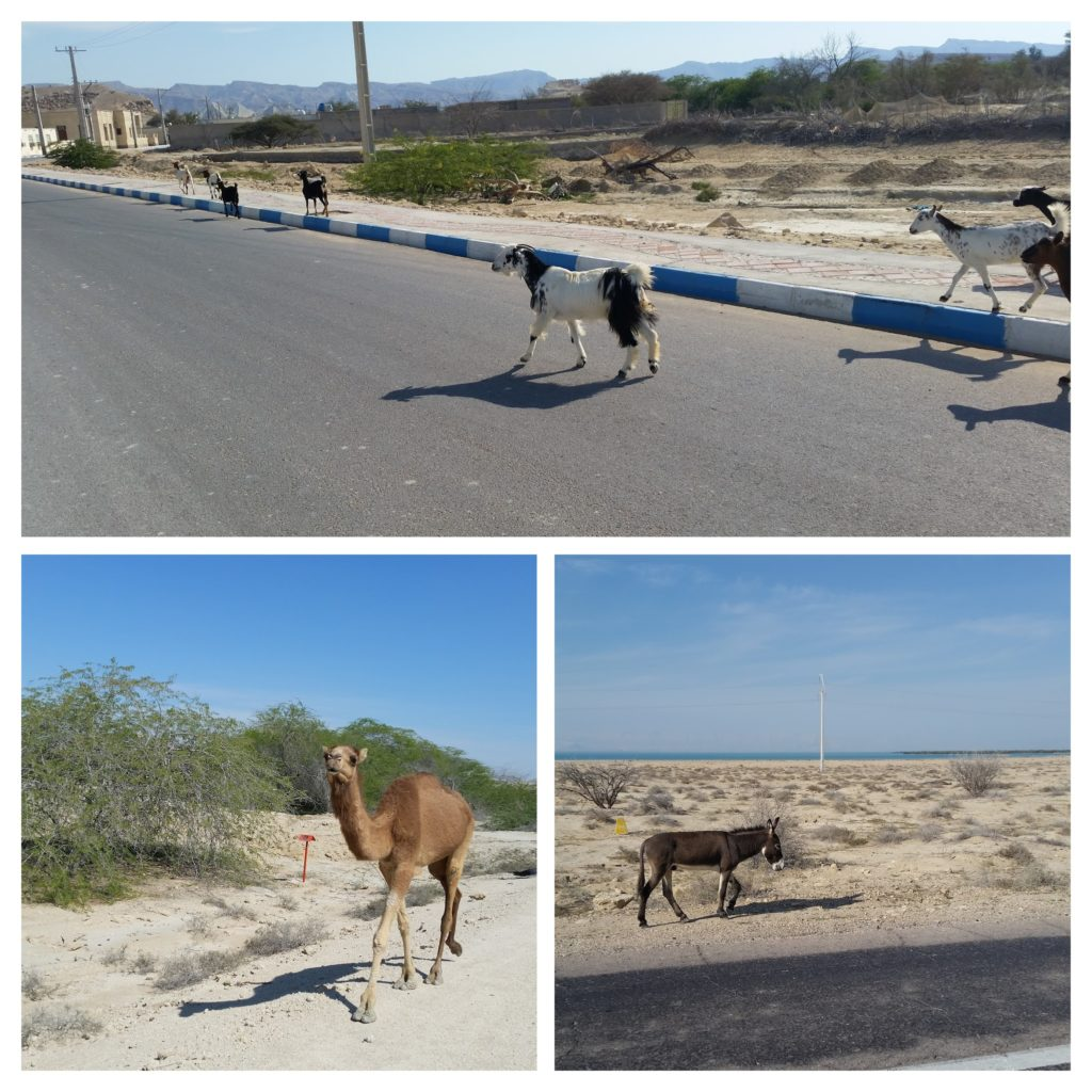 Animals we saw during the day